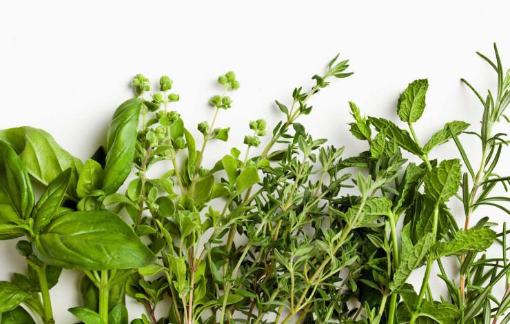 Naturpflanzenextrakte