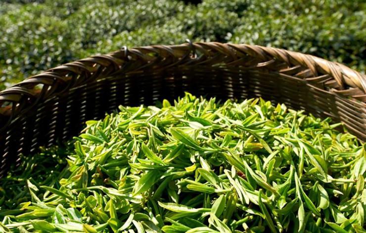 Biokräuter- und Teemischungen