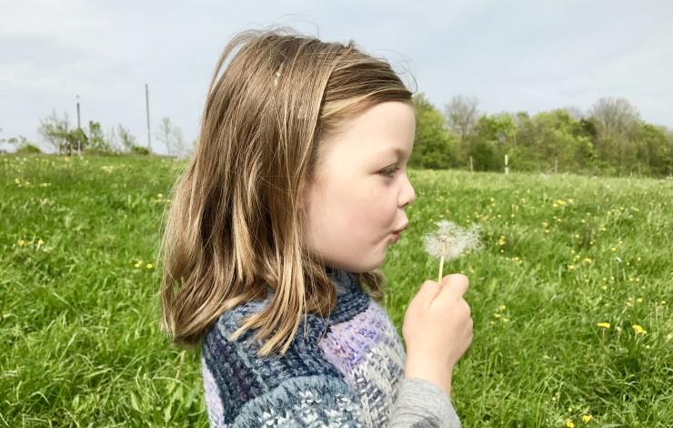 Homöopathie - Pollenallergie