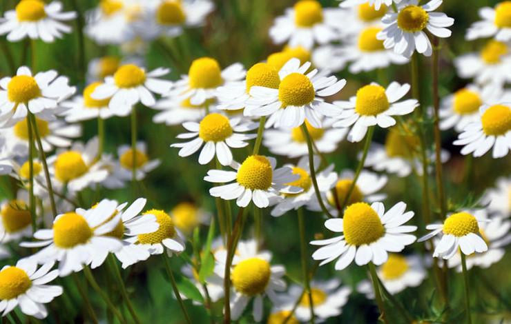 Homöopathie - ein Blumenstrauss