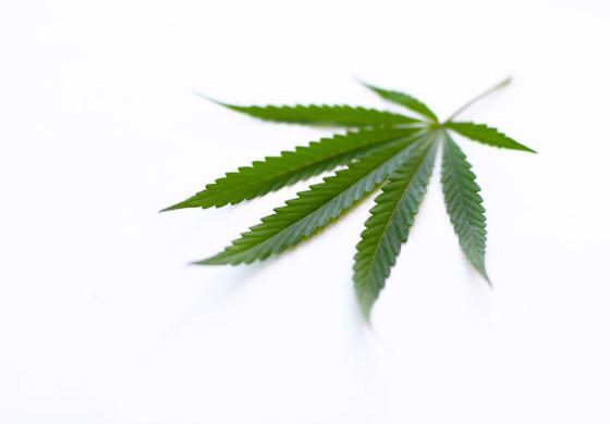 Cannabis! Rauschmittel oder Schmerzmittel?